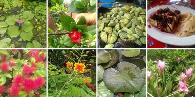 Lotus Farm in Taiwan