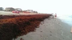 Seaweed on the Galveston beach