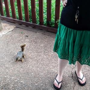 Squirrel at Hafer Park in Edmond , OK