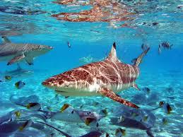 Bora Bora sealife