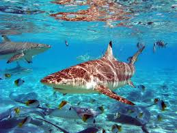 Bora Bora sealife