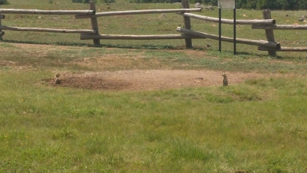Prairie Dogs in the Wichita Mountains