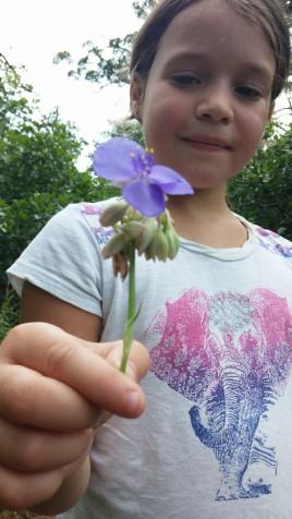 A flower at Wichita Mountains