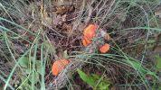 Red Mushrooms in Wichita Mountains