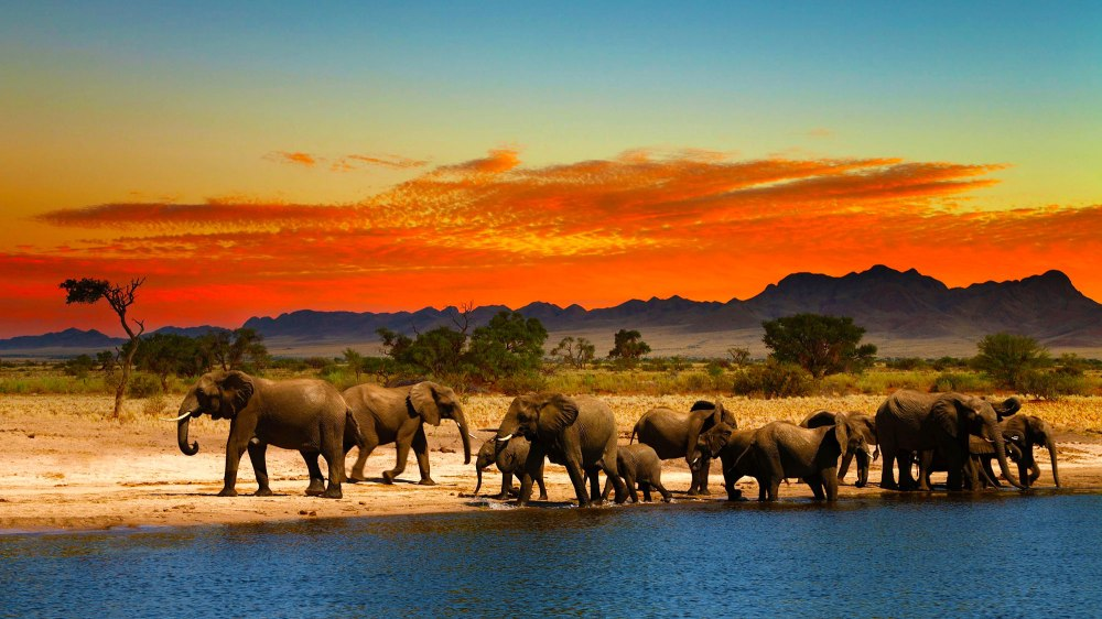 South Africa Elephants