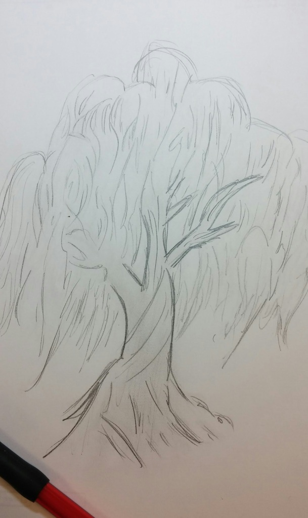 Willow tree from Colorado Spring: drawing