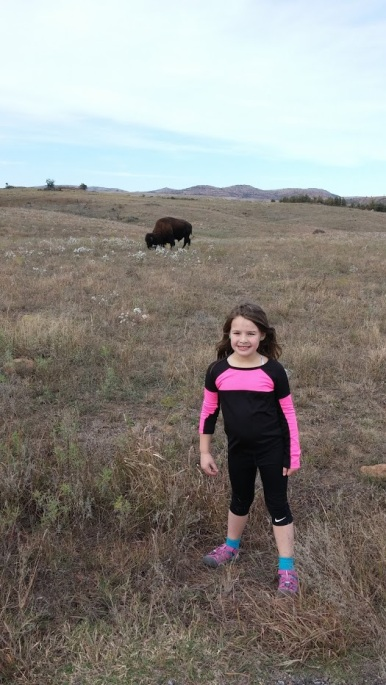 Wichita Mountains Bison