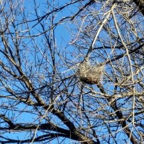 Hanging nest at Lake Thunderbird