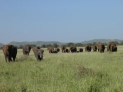 Elephants in Manyara National Park