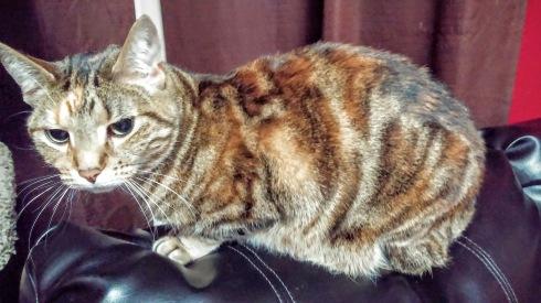 F6 Bangle Cat