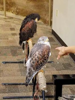 Hawks at Wichita Wildlife Refuge Welcome Center