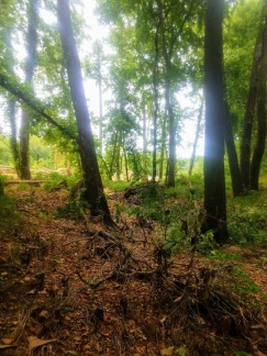 Exploring the woods in Tahlequah