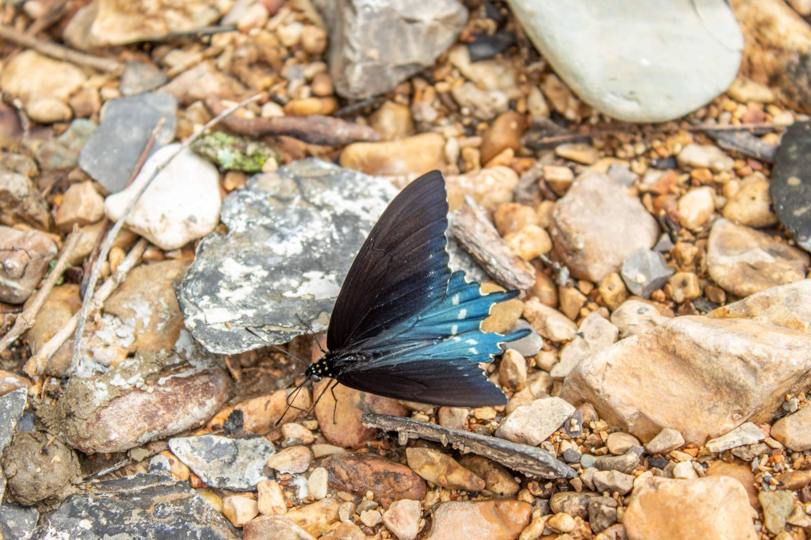 Tahlequah, OK Float Trip June 2019 - butterfly